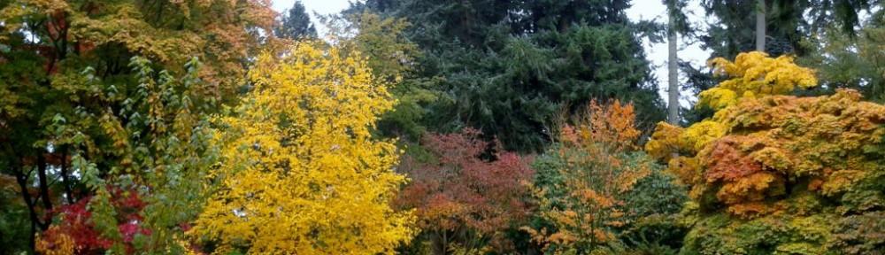 Haikus about Autumn Colour