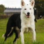 A Dogs Trust dog called Spot