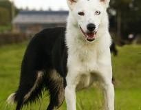 A dog called Spot